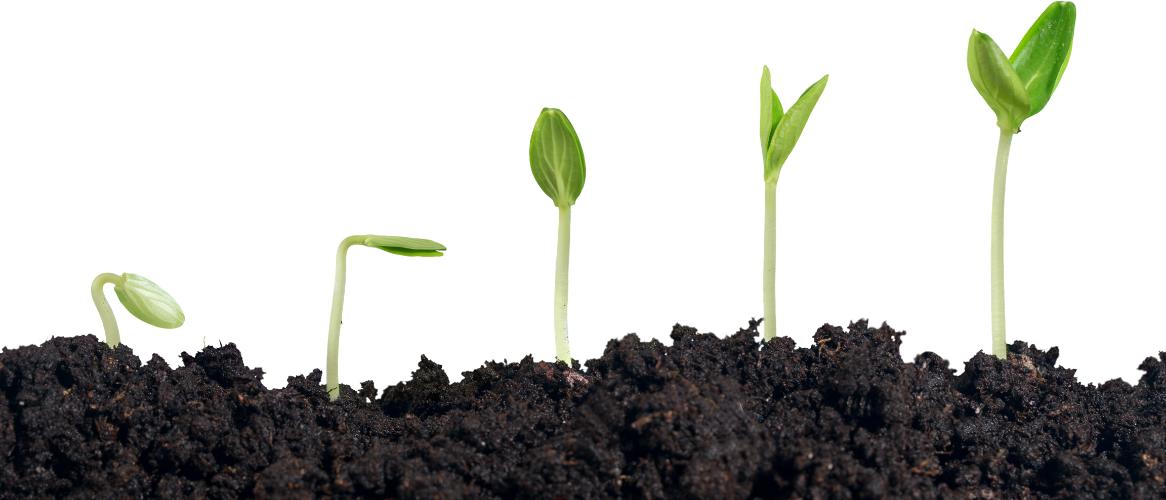 Waarom een groeimindset essentieel is om te verbeteren